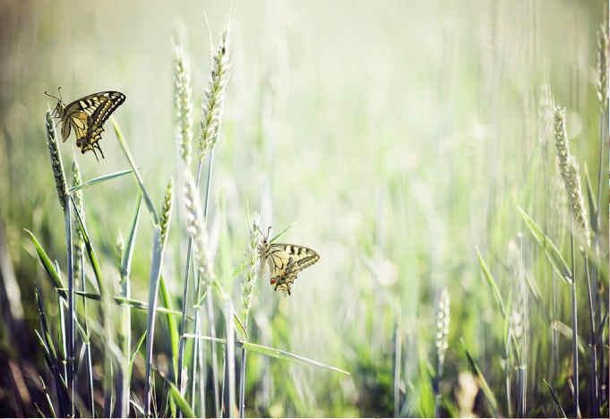 Schmetterlinge Bild von http://imcreator.com/free