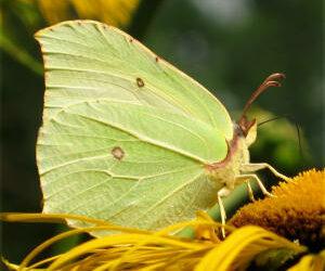 Der Flügelschlag des Schmetterlings