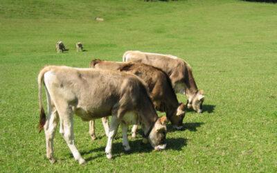 Kryon about Animals